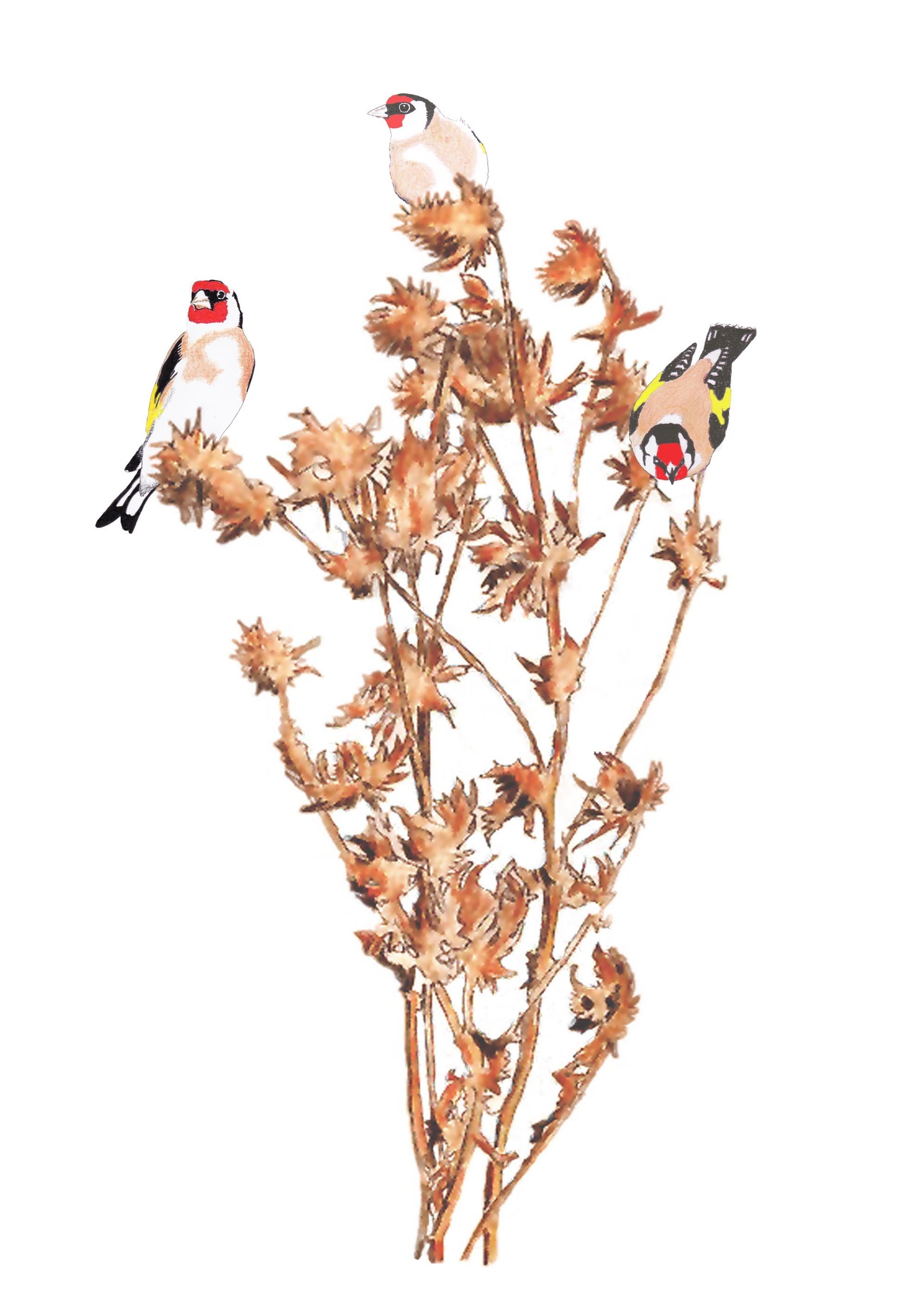 goldfinches-copy