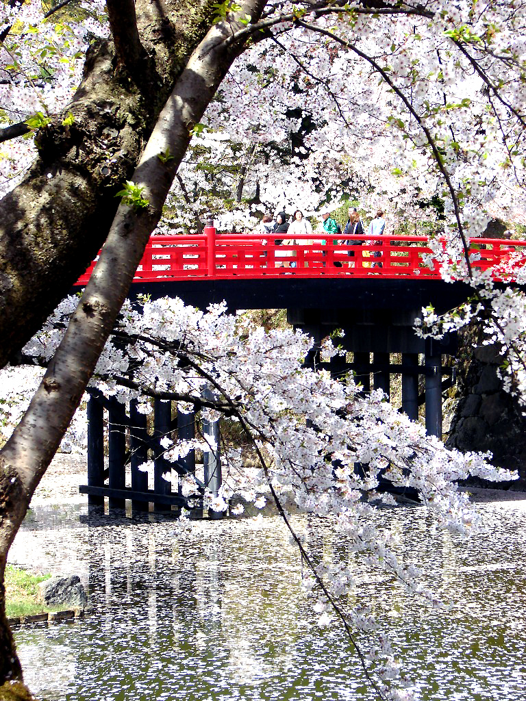 blossom-and-bridge