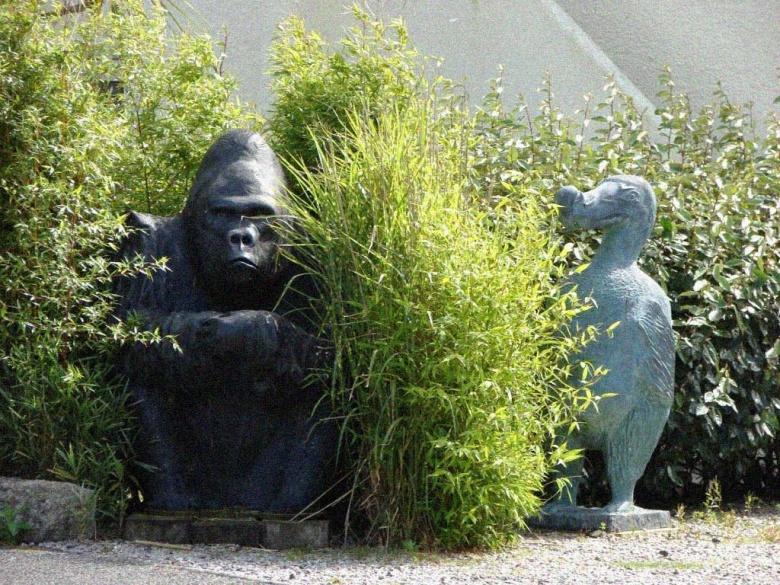 Gorilla and Dodo Lizard - comp.JPG