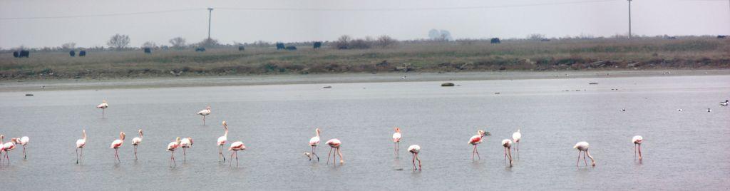 Flamingos 1.jpg