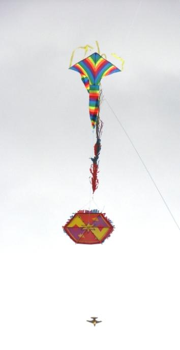 Kites 3.JPG
