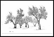 Olives-Sienna 01-reduced