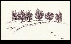 Olives-Tuscany-1974